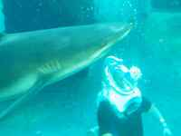 SeaTrek Adventure lets you walk underwater in the shark tank at Atlantis Resort for $115 per pers. for 20 minutes.