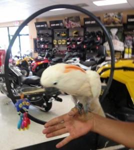 East Tennessee ATV & Powersports in Elizabethton, TN